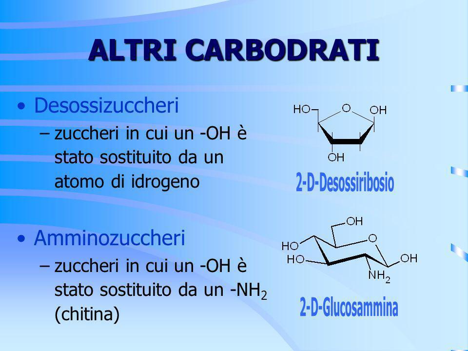 ALTRI CARBODRATI Desossizuccheri –zuccheri in cui un -OH è stato sostituito da un atomo di idrogeno Amminozuccheri –zuccheri in cui un -OH è stato sos