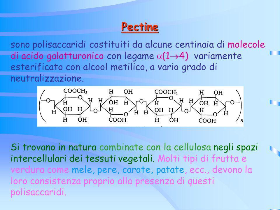 Pectine sono polisaccaridi costituiti da alcune centinaia di molecole di acido galatturonico con legame (1 4) variamente esterificato con alcool metil