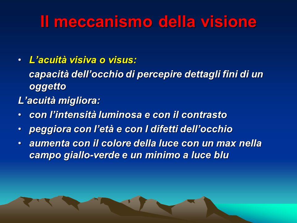 Il meccanismo della visione Lacuità visiva o visus:Lacuità visiva o visus: capacità dellocchio di percepire dettagli fini di un oggetto capacità dello