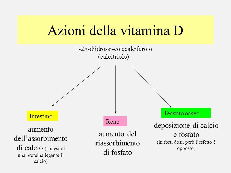 Azioni della vitamina D 1-25-diidrossi-colecalciferolo (calcitriolo) aumento dellassorbimento di calcio (sintesi di una proteina legante il calcio) In