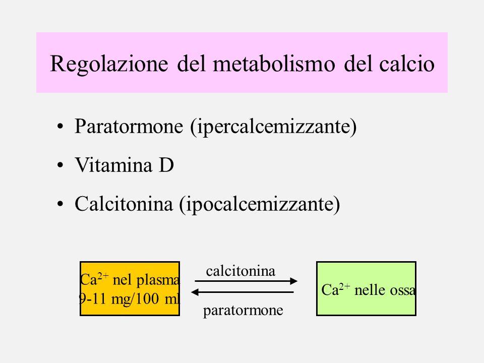 Regolazione del metabolismo del calcio Paratormone (ipercalcemizzante) Vitamina D Calcitonina (ipocalcemizzante) Ca 2+ nel plasma 9-11 mg/100 ml Ca 2+