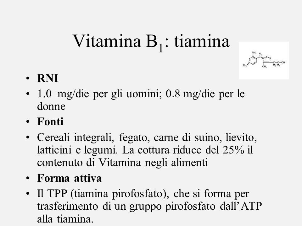 Vitamina B 1 : tiamina RNI 1.0 mg/die per gli uomini; 0.8 mg/die per le donne Fonti Cereali integrali, fegato, carne di suino, lievito, latticini e le