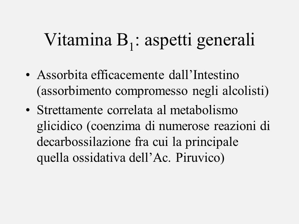 Vitamina B 1 : aspetti generali Assorbita efficacemente dallIntestino (assorbimento compromesso negli alcolisti) Strettamente correlata al metabolismo