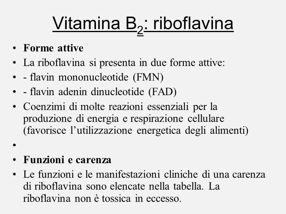 Vitamina B 2 : riboflavina Forme attive La riboflavina si presenta in due forme attive: - flavin mononucleotide (FMN) - flavin adenin dinucleotide (FA
