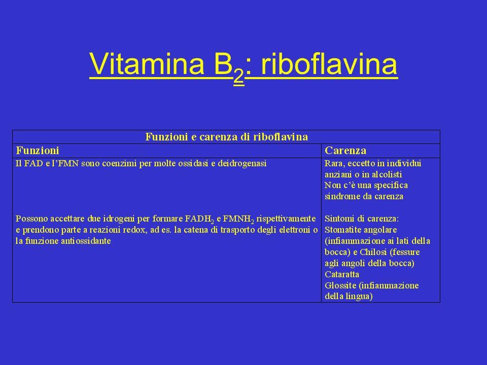 Vitamina B 2 : riboflavina
