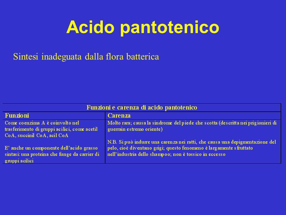 Acido pantotenico Sintesi inadeguata dalla flora batterica