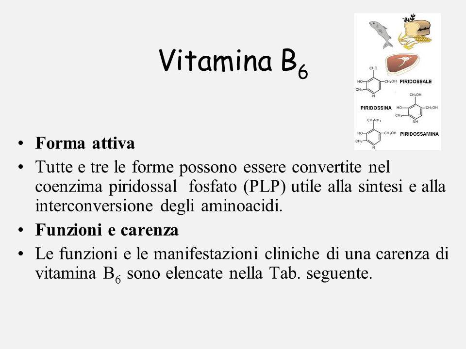 Vitamina B 6 Forma attiva Tutte e tre le forme possono essere convertite nel coenzima piridossal fosfato (PLP) utile alla sintesi e alla interconversi