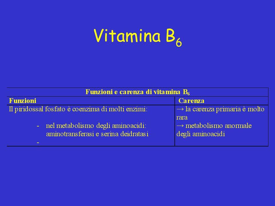 Vitamina B 6