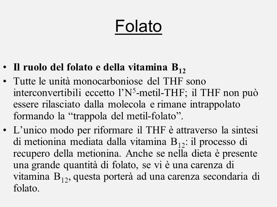 Folato Il ruolo del folato e della vitamina B 12 Tutte le unità monocarboniose del THF sono interconvertibili eccetto lN 5 -metil-THF; il THF non può