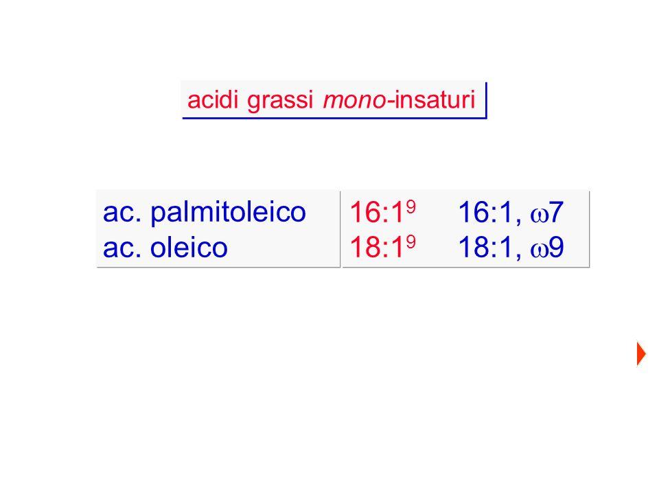 acidi grassi mono-insaturi ac. palmitoleico ac. oleico 16:1 9 16:1, 7 18:1 9 18:1, 9