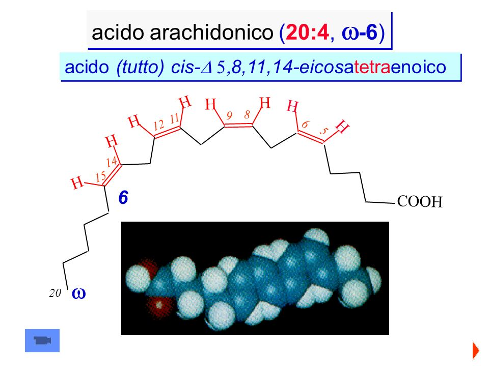 acido arachidonico (20:4, -6) 20 11 12 15 14 H H H H C O O H 6 5 6 8 9 H H H H acido (tutto) cis- 8,11,14-eicosatetraenoico