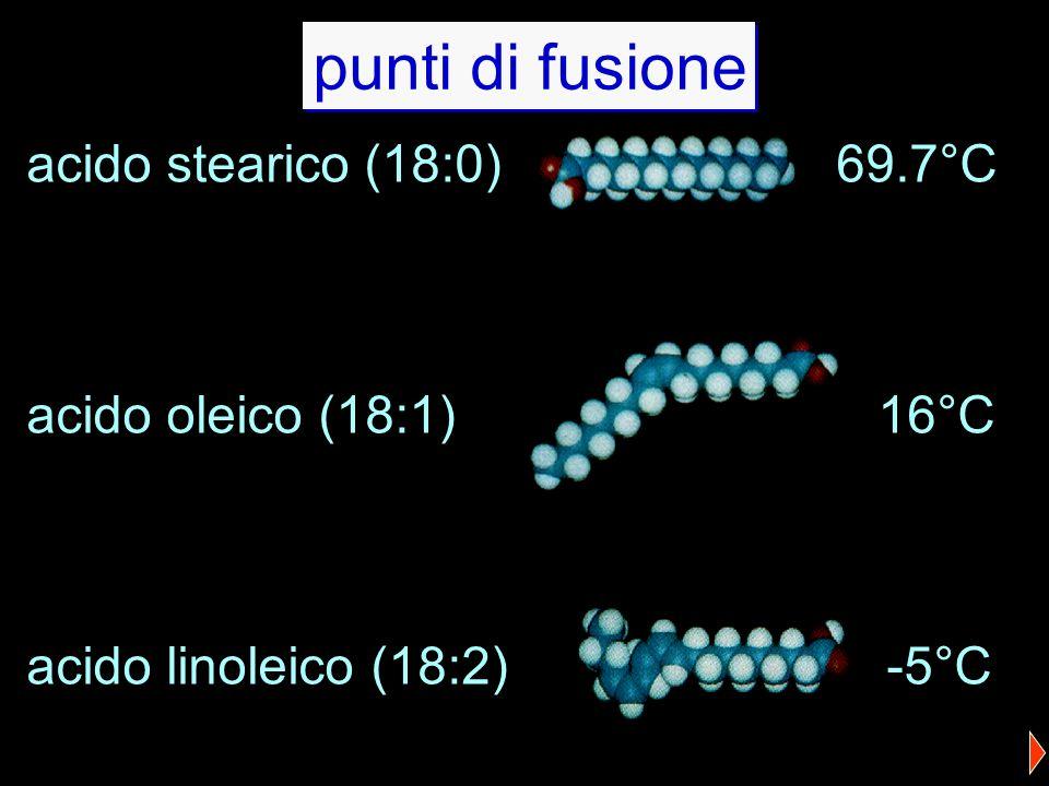 acido stearico (18:0) 69.7°C acido oleico (18:1) 16°C acido linoleico (18:2) -5°C punti di fusione