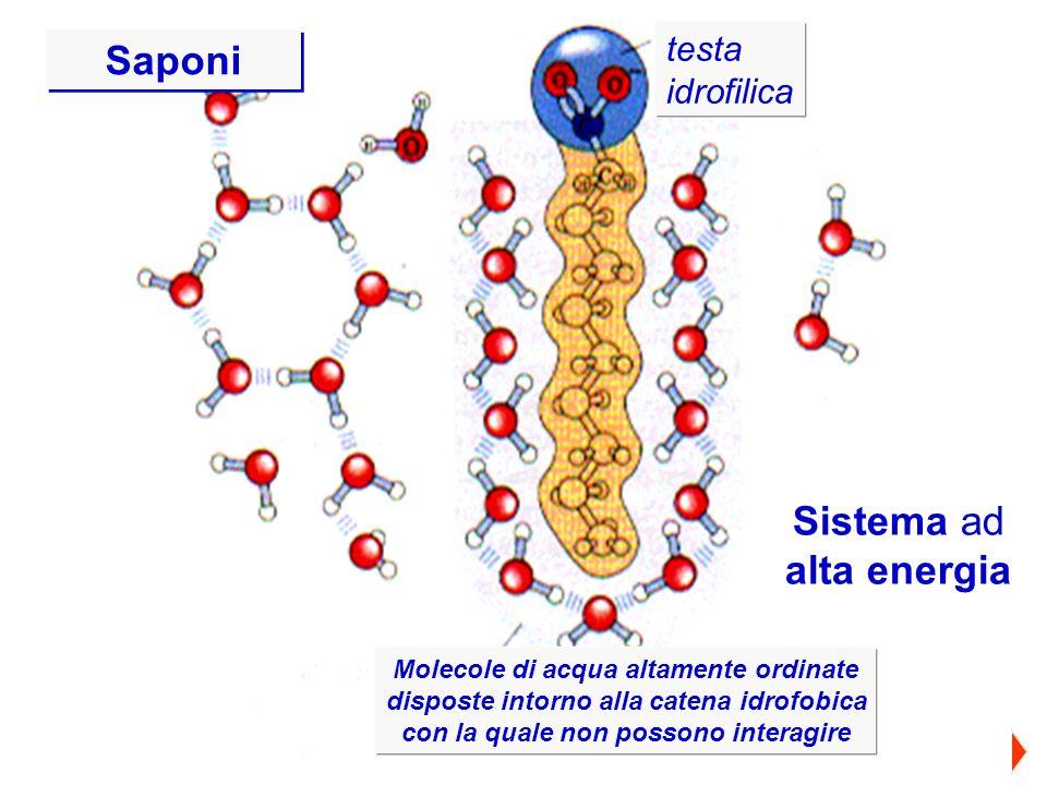 testa idrofilica testa idrofilica Molecole di acqua altamente ordinate disposte intorno alla catena idrofobica Molecole di acqua altamente ordinate di