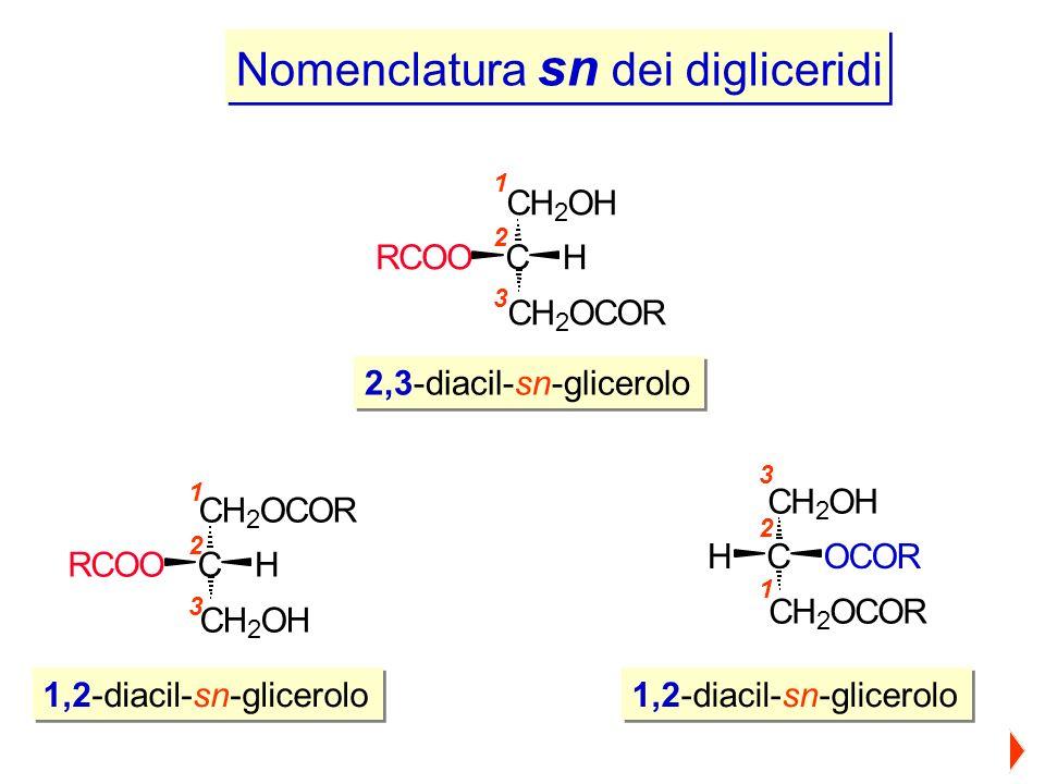1,2-diacil-sn-glicerolo 2,3-diacil-sn-glicerolo 1,2-diacil-sn-glicerolo Nomenclatura sn dei digliceridi 1 2 3 CH 2 OCOR C CH 2 OH HRCOO 1 2 3 CH 2 OH