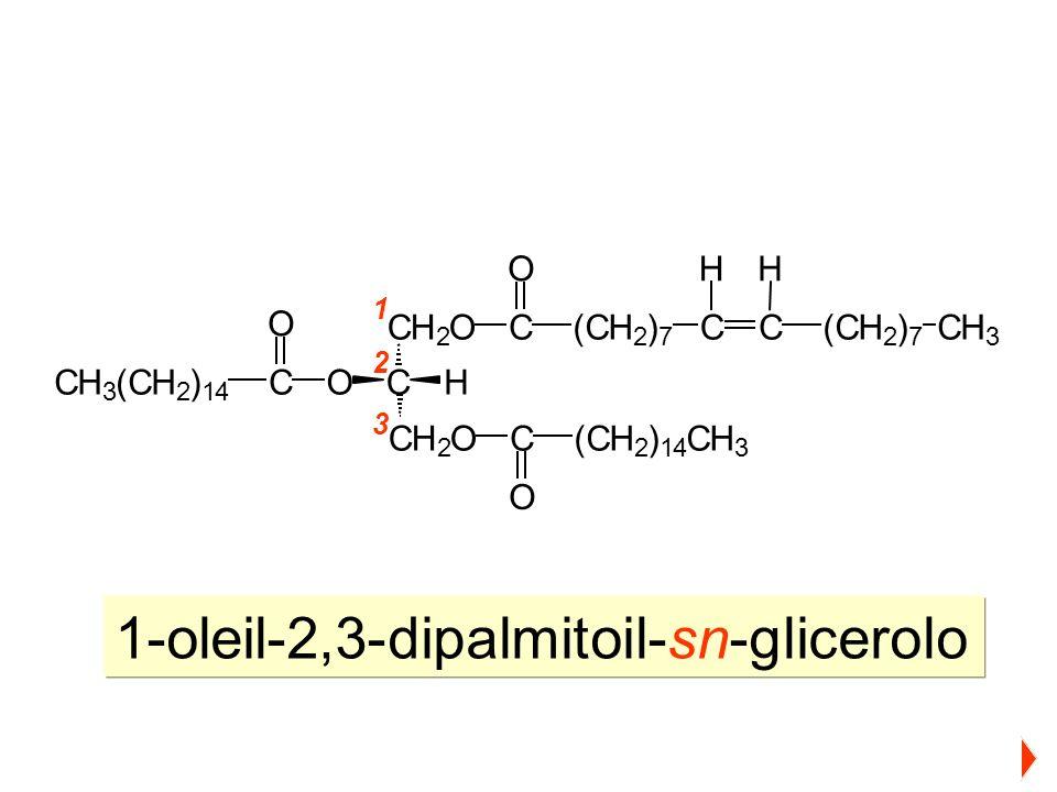1-oleil-2,3-dipalmitoil-sn-glicerolo 1 2 3 CH 2 O C CH 2 O HO C O (CH 2 ) 14 CH 3 C O CH 3 (CH 2 ) 14 C O (CH 2 ) 7 CC(CH 2 ) 7 CH 3 HH