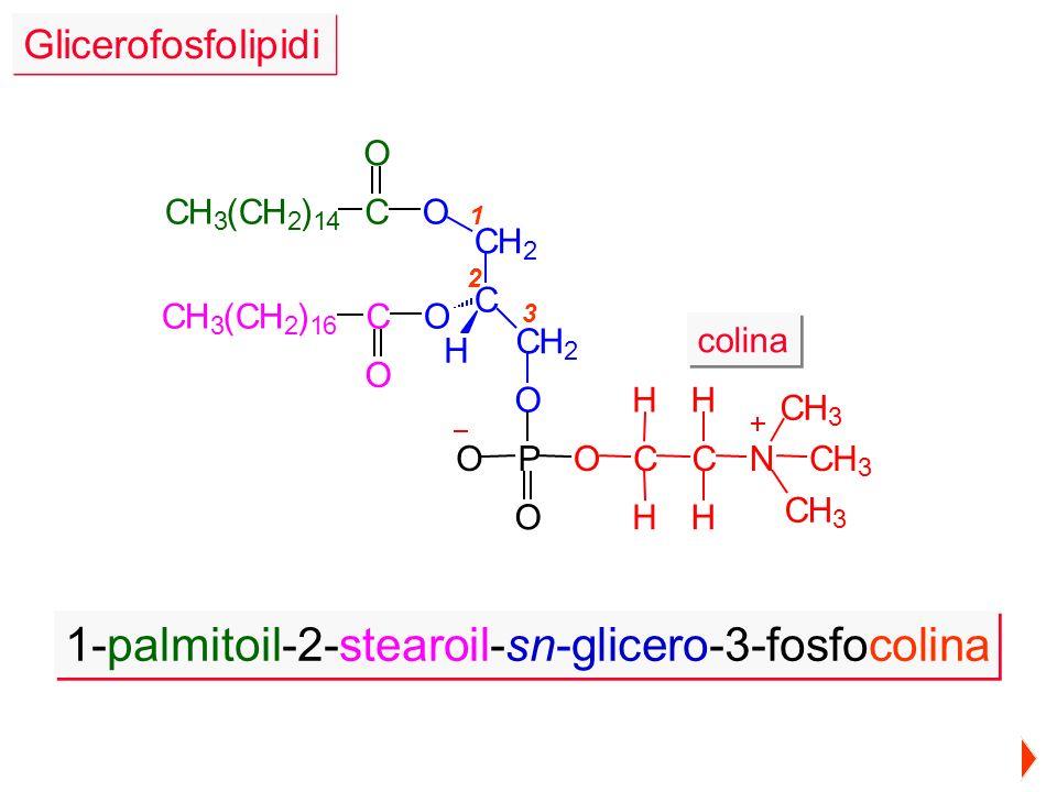 1-palmitoil-2-stearoil-sn-glicero-3-fosfocolina colina C H H C H H N CH 3 CH 3 CH 3 1 2 3 CH 3 (CH 2 ) 16 O O CO O CO H CH 2 CH 2 C P O OO CH 3 (CH 2