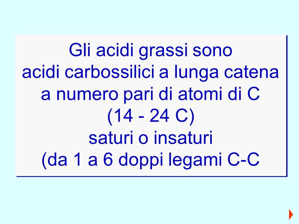 Gli acidi grassi sono acidi carbossilici a lunga catena a numero pari di atomi di C (14 - 24 C) saturi o insaturi (da 1 a 6 doppi legami C-C Gli acidi