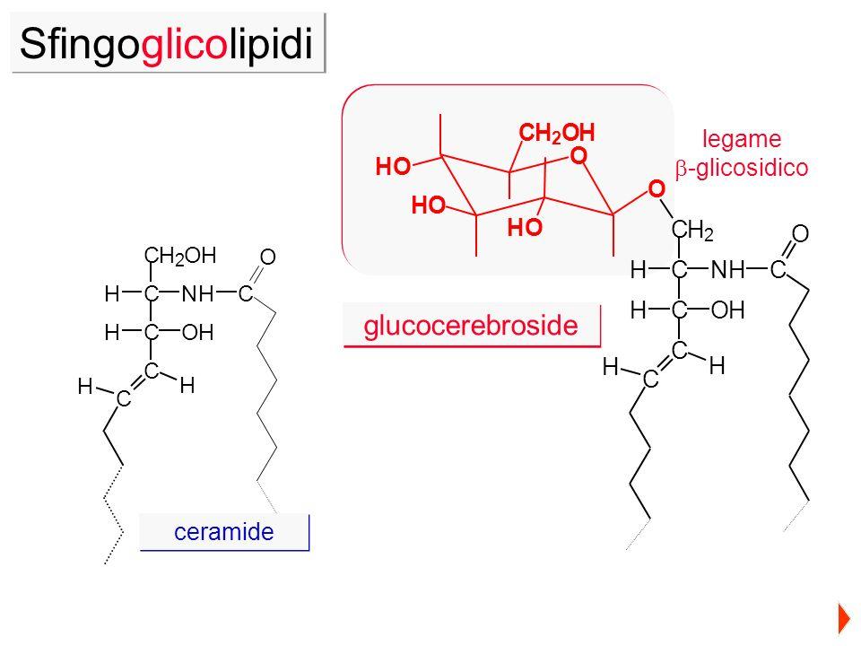 O O CH 2 OH HO HO HO H H C O C C HOHC HNHC CH 2 CH 2 OH CNHH COHH C C O C H H ceramide glucocerebroside Sfingoglicolipidi legame -glicosidico