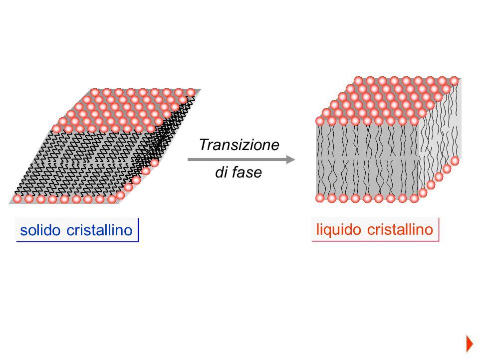 solido cristallino liquido cristallino Transizione di fase