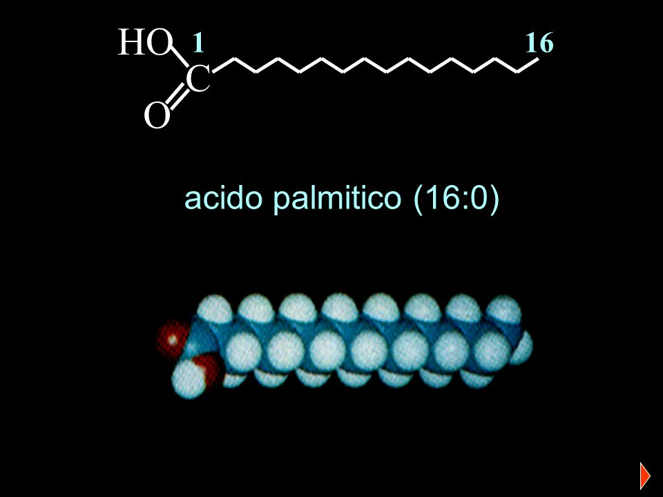 Acidi grassi…particolari Sono insaturi Contengono 20 atomi di carbonio Non sono prodotti dal corpo Prostaglandine Leucotrieni Tromboxani