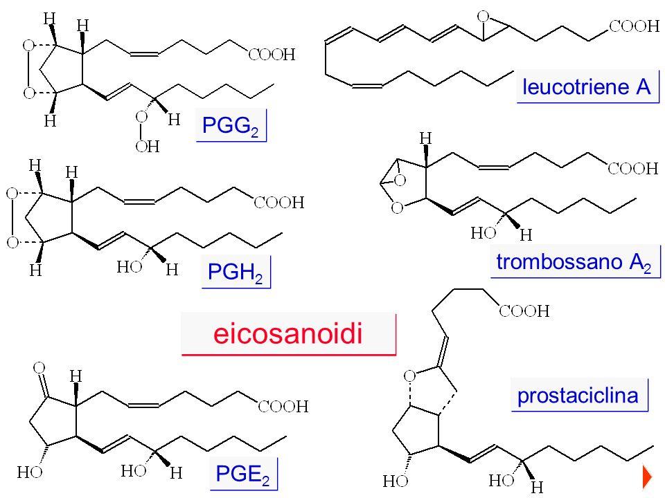 PGG 2 PGH 2 PGE 2 leucotriene A trombossano A 2 prostaciclina eicosanoidi