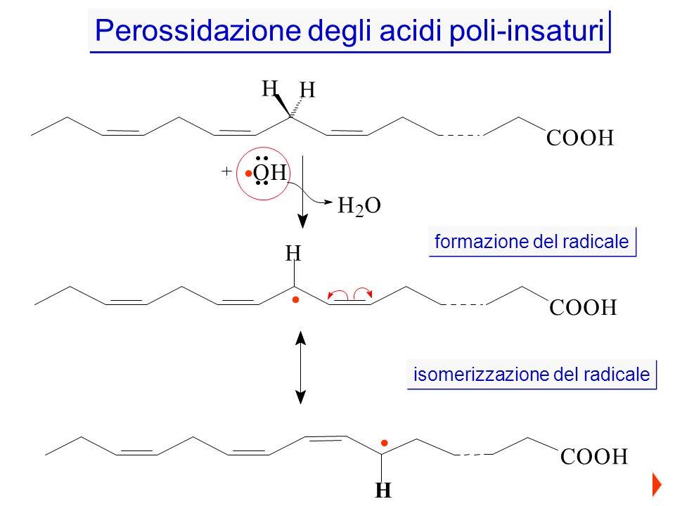 H H COOH OH H 2 O COOH H.. Perossidazione degli acidi poli-insaturi COOH. H formazione del radicale isomerizzazione del radicale