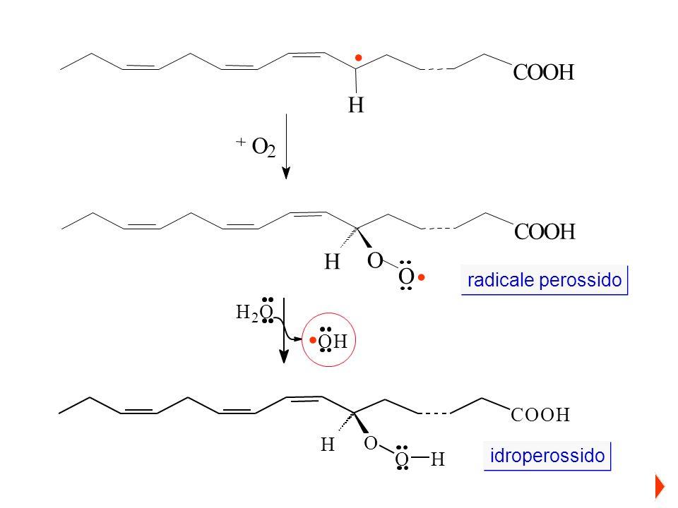 O 2 COOH H O O. COOH H. radicale perossido idroperossido. COOH H O OH H 2 O OH