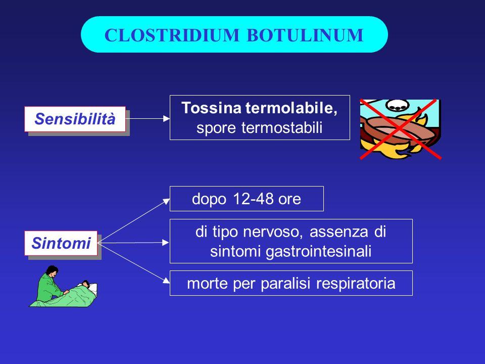 Sensibilità Sintomi Tossina termolabile, spore termostabili morte per paralisi respiratoria di tipo nervoso, assenza di sintomi gastrointesinali dopo 12-48 ore CLOSTRIDIUM BOTULINUM