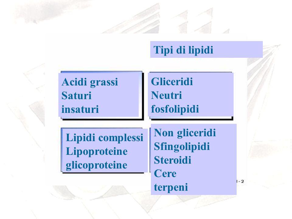 Tipi di lipidi Acidi grassi Saturi insaturi Gliceridi Neutri fosfolipidi Lipidi complessi Lipoproteine glicoproteine Non gliceridi Sfingolipidi Steroi