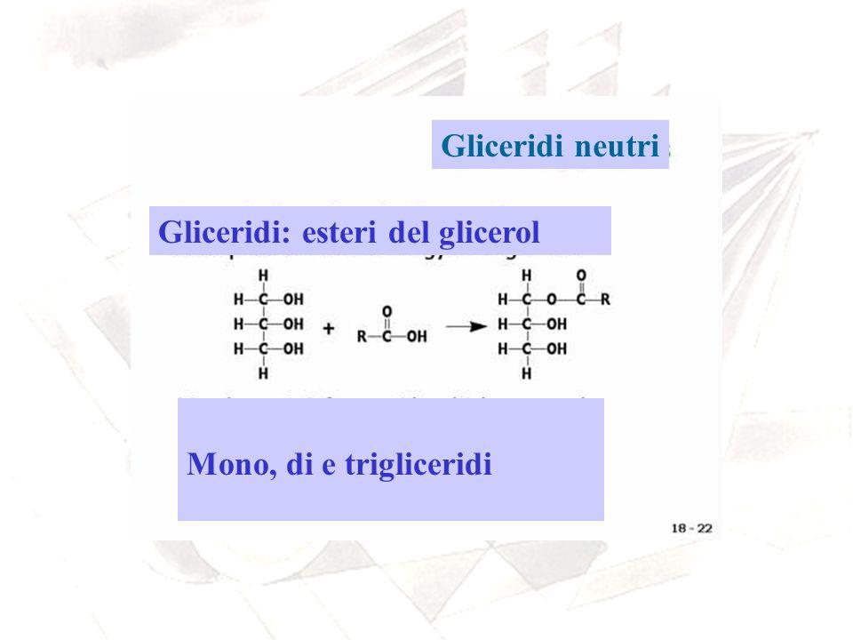 Gliceridi neutri Gliceridi: esteri del glicerol Mono, di e trigliceridi