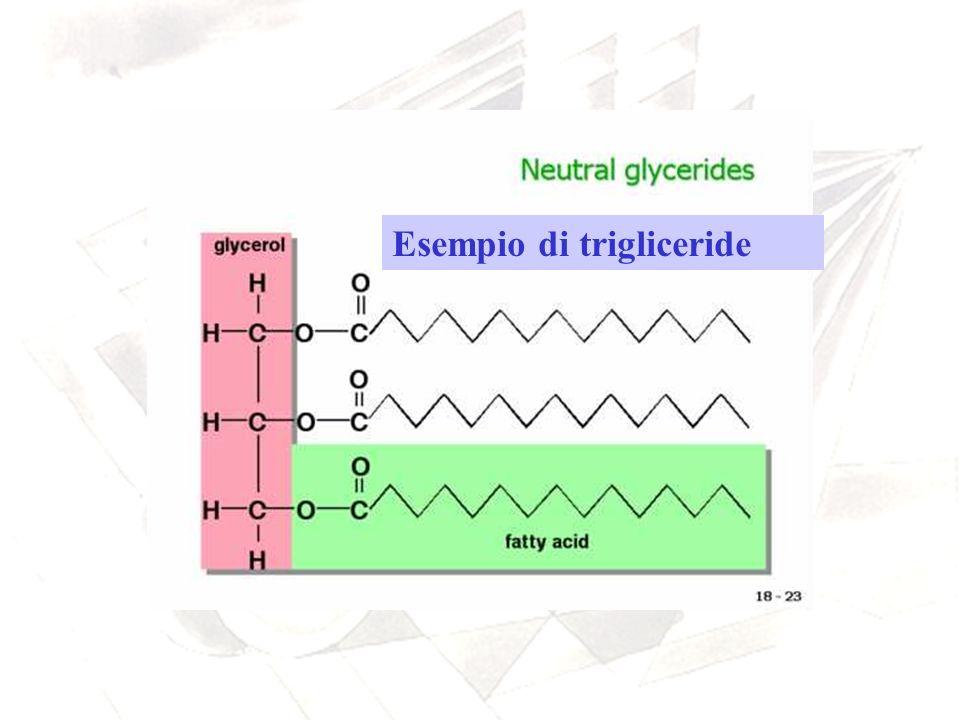 Esempio di trigliceride
