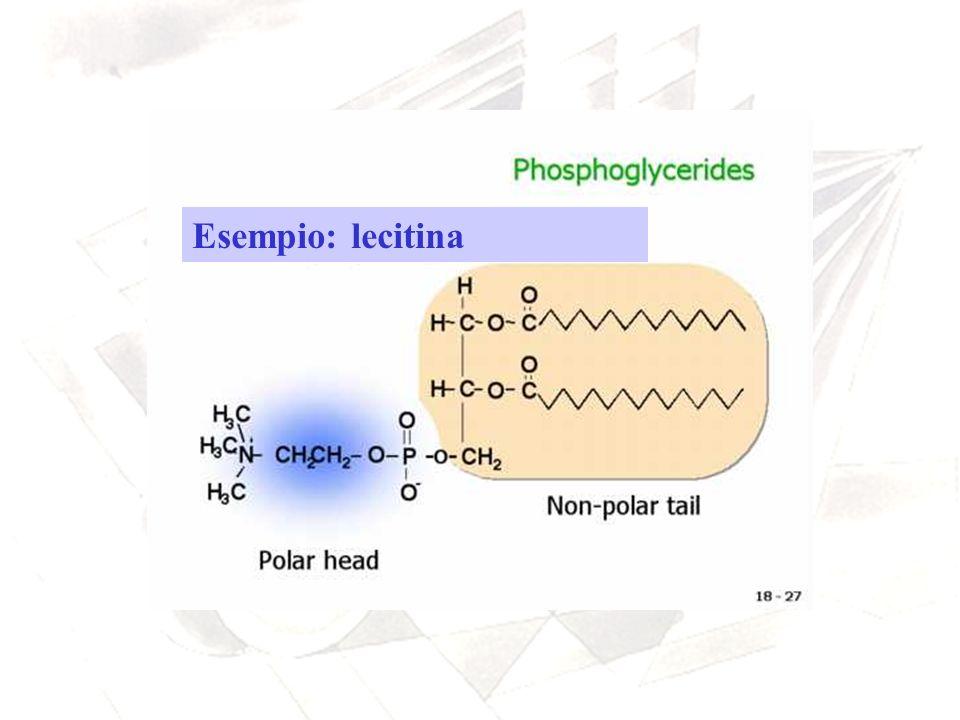 Esempio: lecitina