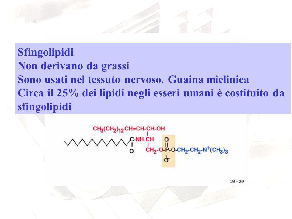 Sfingolipidi Non derivano da grassi Sono usati nel tessuto nervoso. Guaina mielinica Circa il 25% dei lipidi negli esseri umani è costituito da sfingo