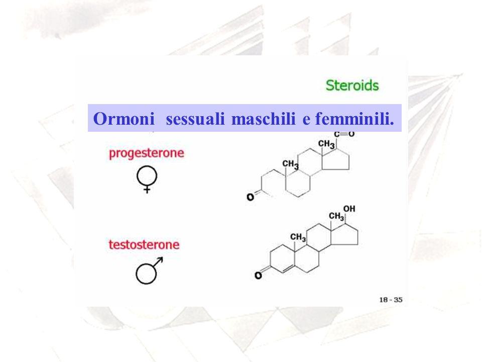 Ormoni sessuali maschili e femminili.