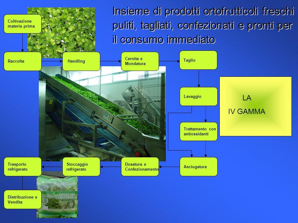 Insieme di prodotti ortofrutticoli freschi puliti, tagliati, confezionati e pronti per il consumo immediato Coltivazione materia prima Raccolta Handli
