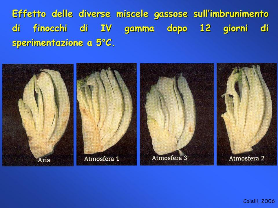 Effetto delle diverse miscele gassose sullimbrunimento di finocchi di IV gamma dopo 12 giorni di sperimentazione a 5°C. Colelli, 2006