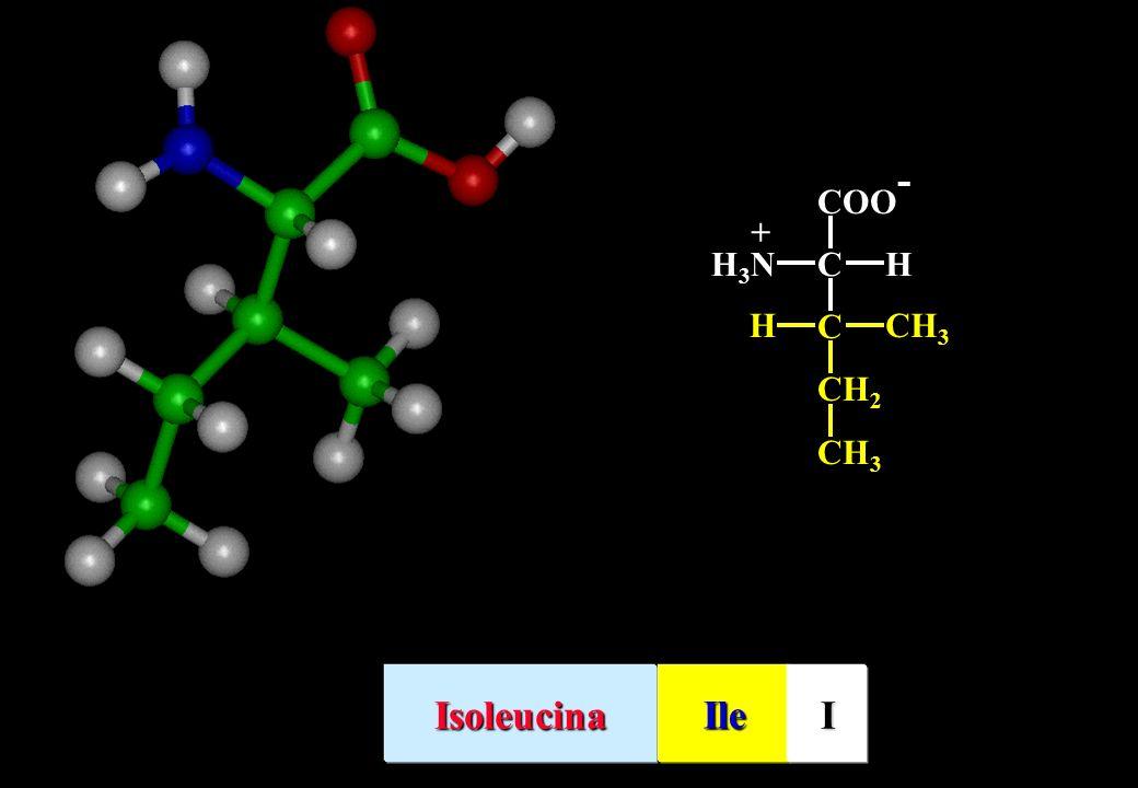 C CH 2 H COO - CHH3NH3N + IsoleucinaIleI