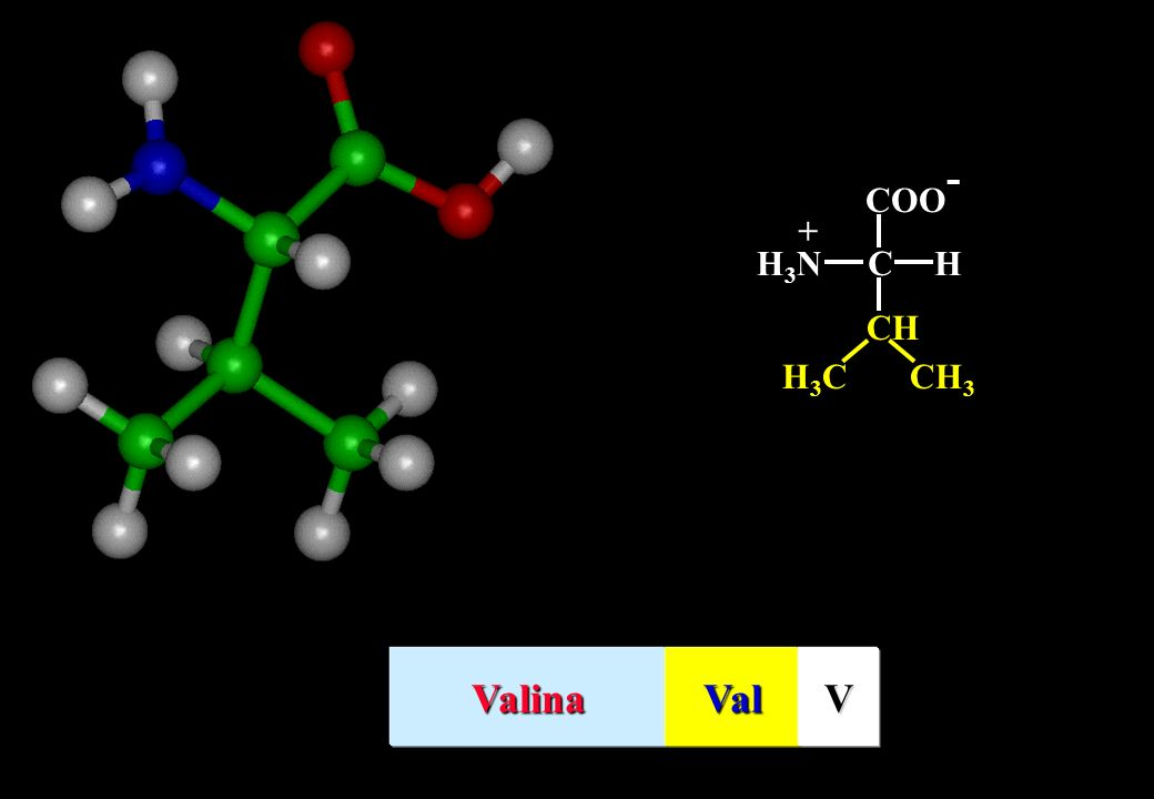 C HH3NH3N + CH CH 3 H3CH3C ValinaValV