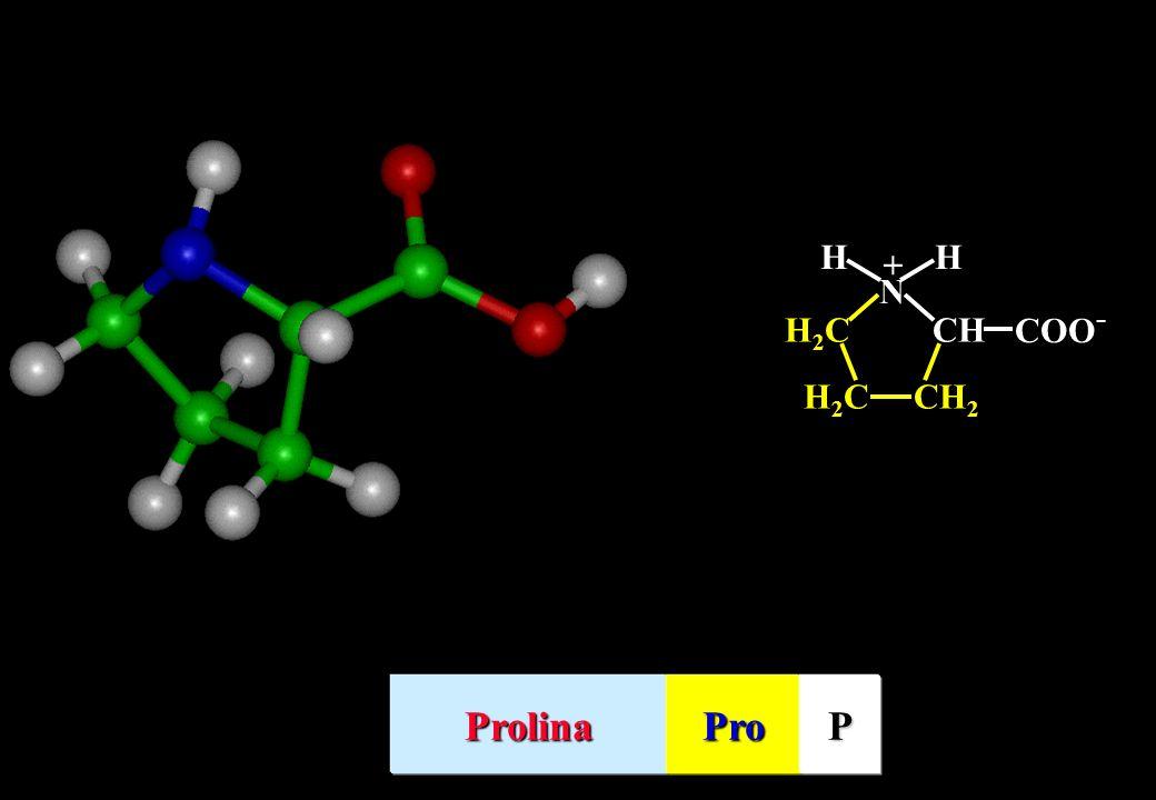 HH N CH COO - CH 2 H2CH2C H2CH2C + ProlinaProP