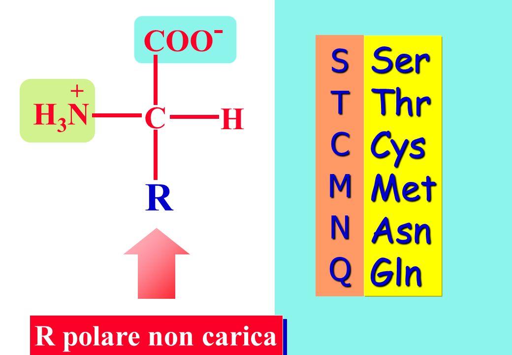 COO - C H R H3NH3N + Ser Thr Cys Met Asn Gln R polare non carica STCMNQ