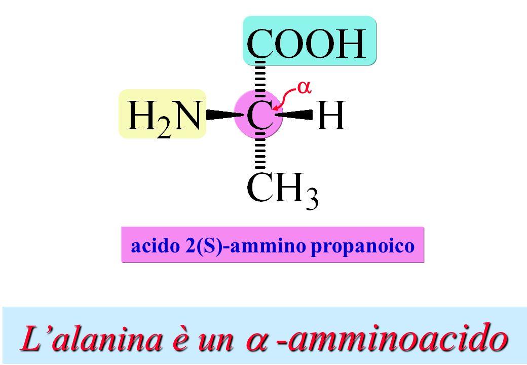 Lalanina è un -amminoacido acido 2(S)-ammino propanoico