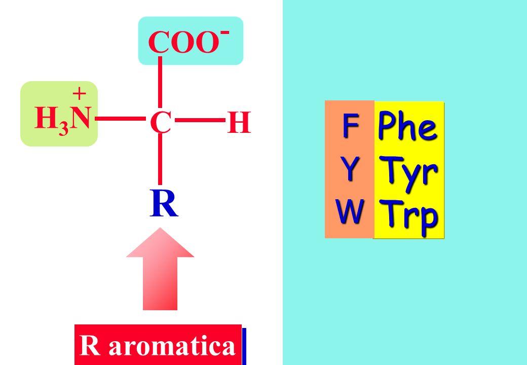 R aromatica COO - CH R H3NH3N + Phe Tyr Trp FYW