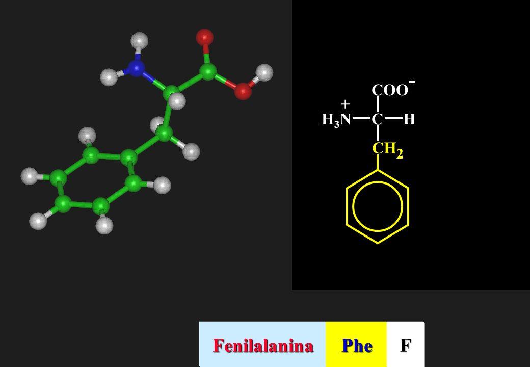 CHH3NH3N + CH 2 FenilalaninaPheF