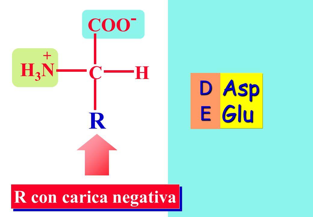 COO - CH R H3NH3N + Asp Glu R con carica negativa DE