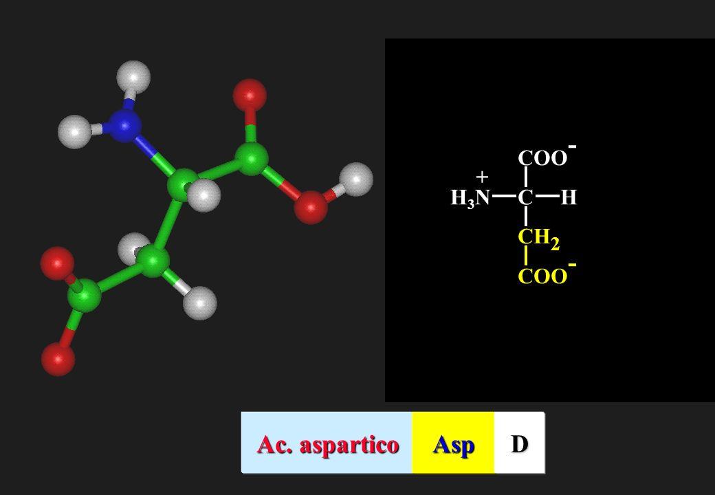 CH 2 COO - CHH3NH3N + Ac. aspartico AspD