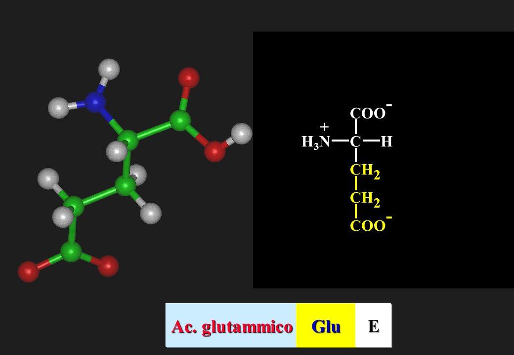 CH 2 COO - CHH3NH3N + Ac. glutammico GluE