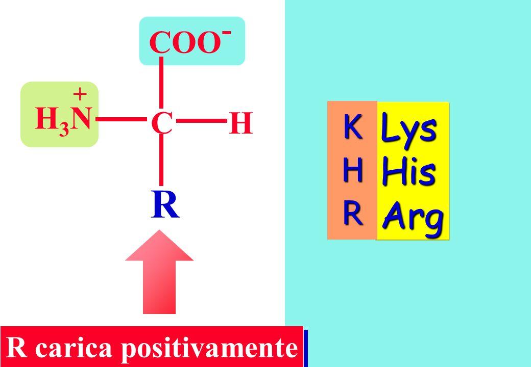 COO - CH R H3NH3N + Lys His Arg R carica positivamente KHR
