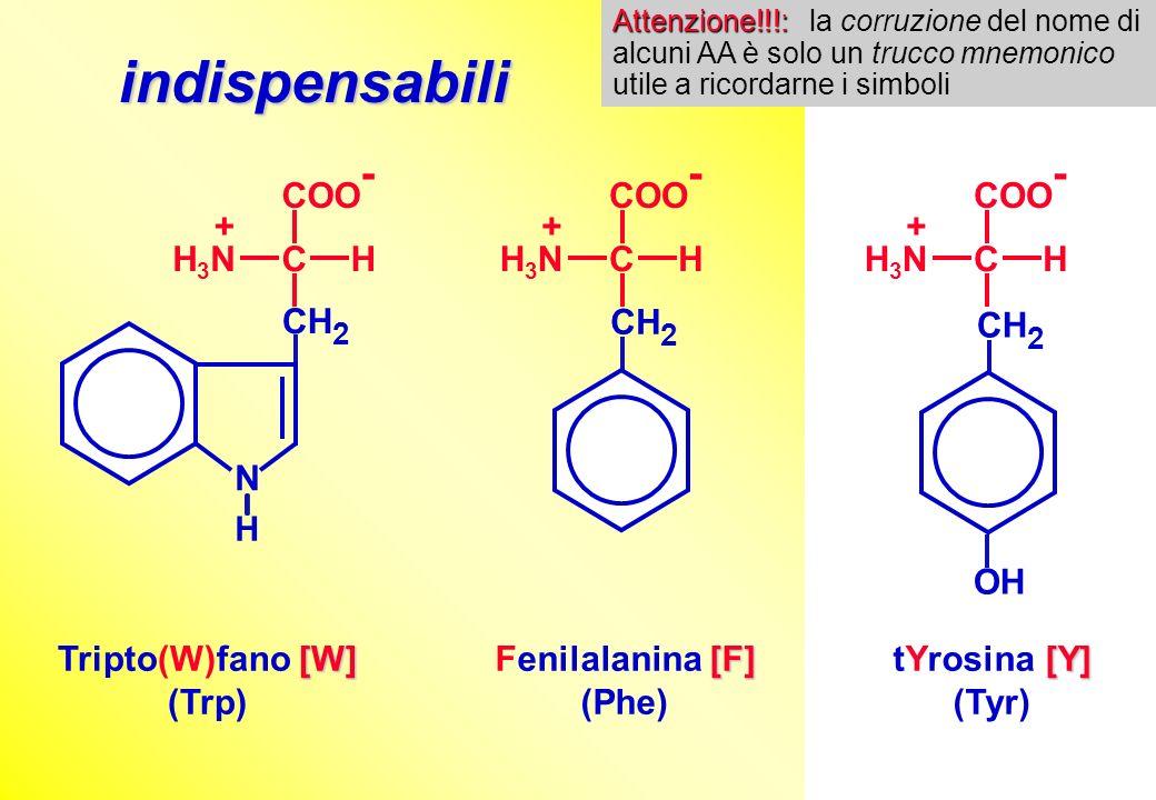 [W] Tripto(W)fano [W] (Trp) [Y] tYrosina [Y] (Tyr) [F] Fenilalanina [F] (Phe) COO - CHH3NH3N + N H CH 2 COO - CHH3NH3N + CH 2 OH COO - CHH3NH3N + CH 2