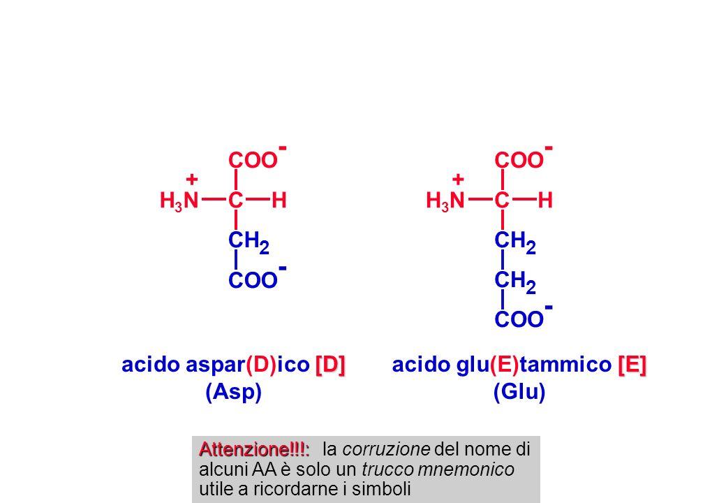 [D] acido aspar(D)ico [D] (Asp) CH 2 COO - CHH3NH3N + [E] acido glu(E)tammico [E] (Glu) CH 2 COO - CHH3NH3N + Attenzione!!!: Attenzione!!!: la corruzi