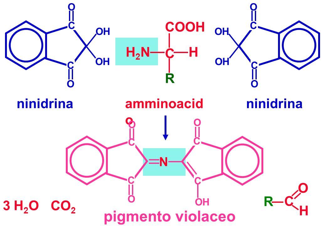 ninidrina C C O O OH C C O O ninidrina COOH C H R H2NH2N amminoacid o pigmento violaceo N O O OH C C O C C CO 2 R C O H 3 H 2 O